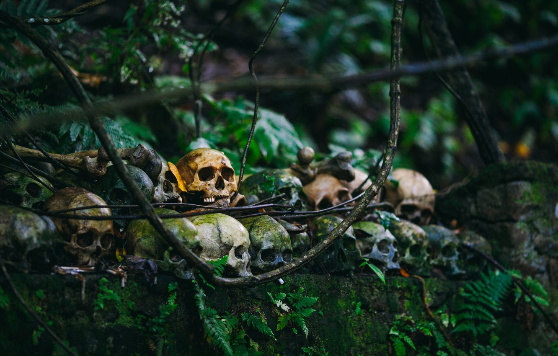 Фото обои природа, кости, черепа
