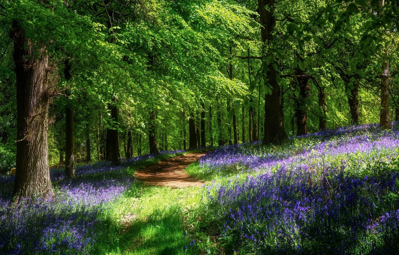 Фото обои лес, солнце, цветы, весна, тропинка