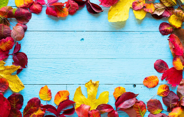 Фото обои осень, листья, фон, colorful, wood, autumn, leaves