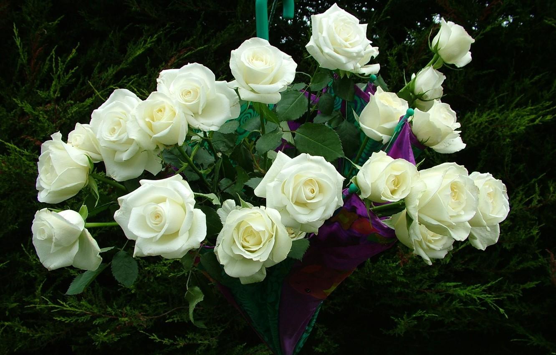 Картинки спасибо белая роза