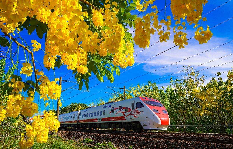 Фото обои цветы, поезд, весна