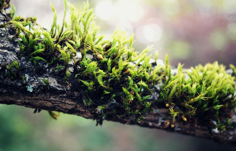 Фото обои Растение, Мох, macro