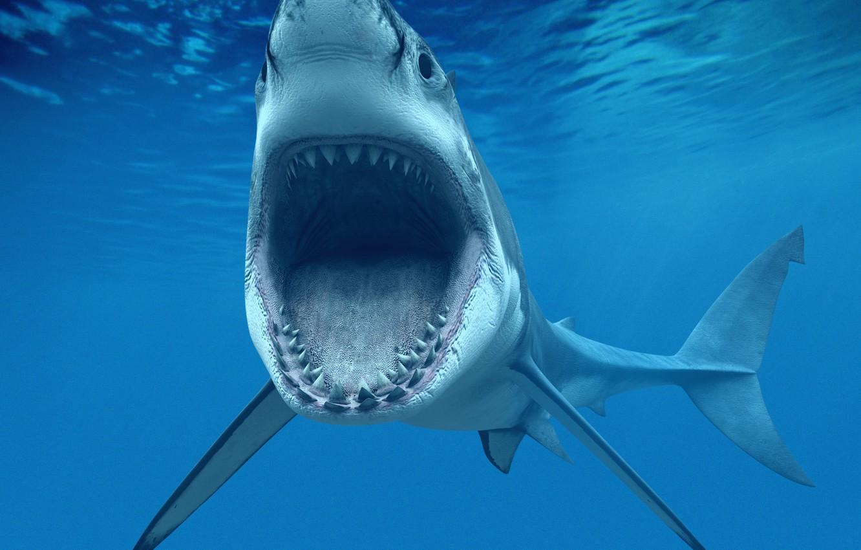 Фото обои sea, ocean, blue, shark