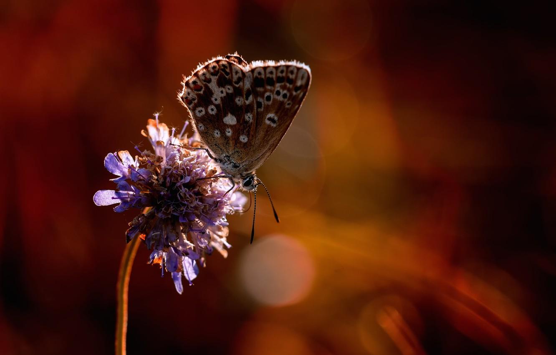 Фото обои цветок, бабочка, боке