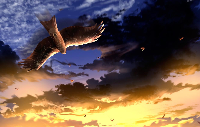 Фото обои небо, закат, птица