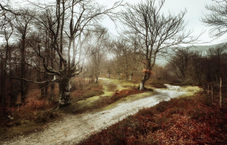 Фото обои дорога, природа, забор