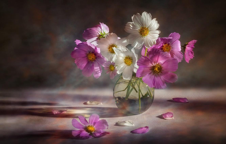 Фото обои цветы, букет, розовые, белые, вазочка, космея, космеи