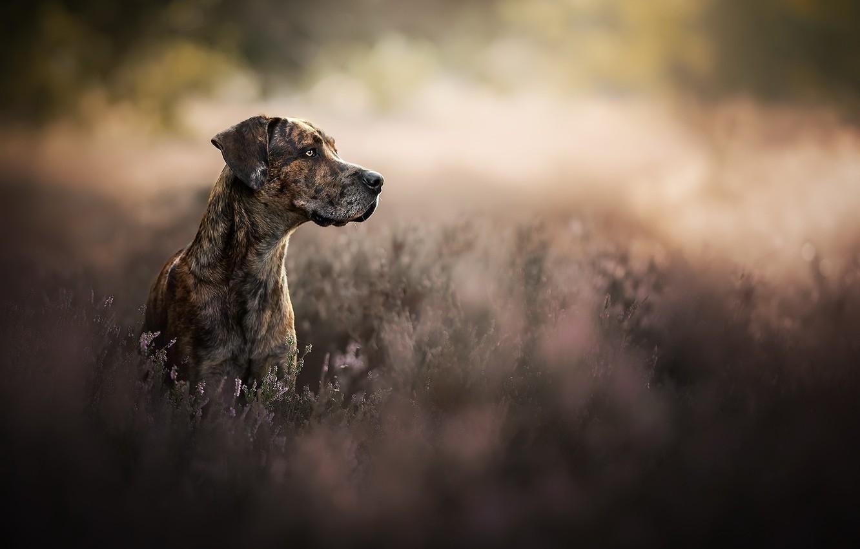 Фото обои природа, друг, собака