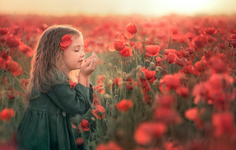 Фото обои поле, лето, закат, цветы, природа, маки, девочка, ребёнок, Козел Марта