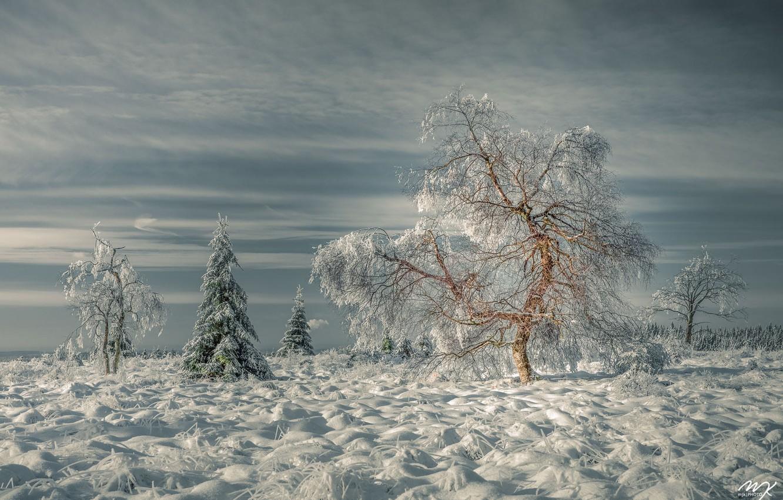 Фото обои зима, трава, снег, деревья, пейзаж, природа