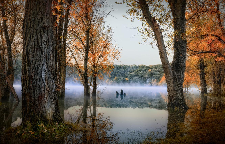 Фото обои осень, лес, деревья, пейзаж, природа, туман, озеро