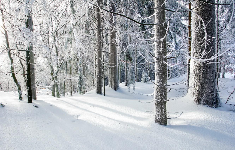 Фото обои холод, зима, лес