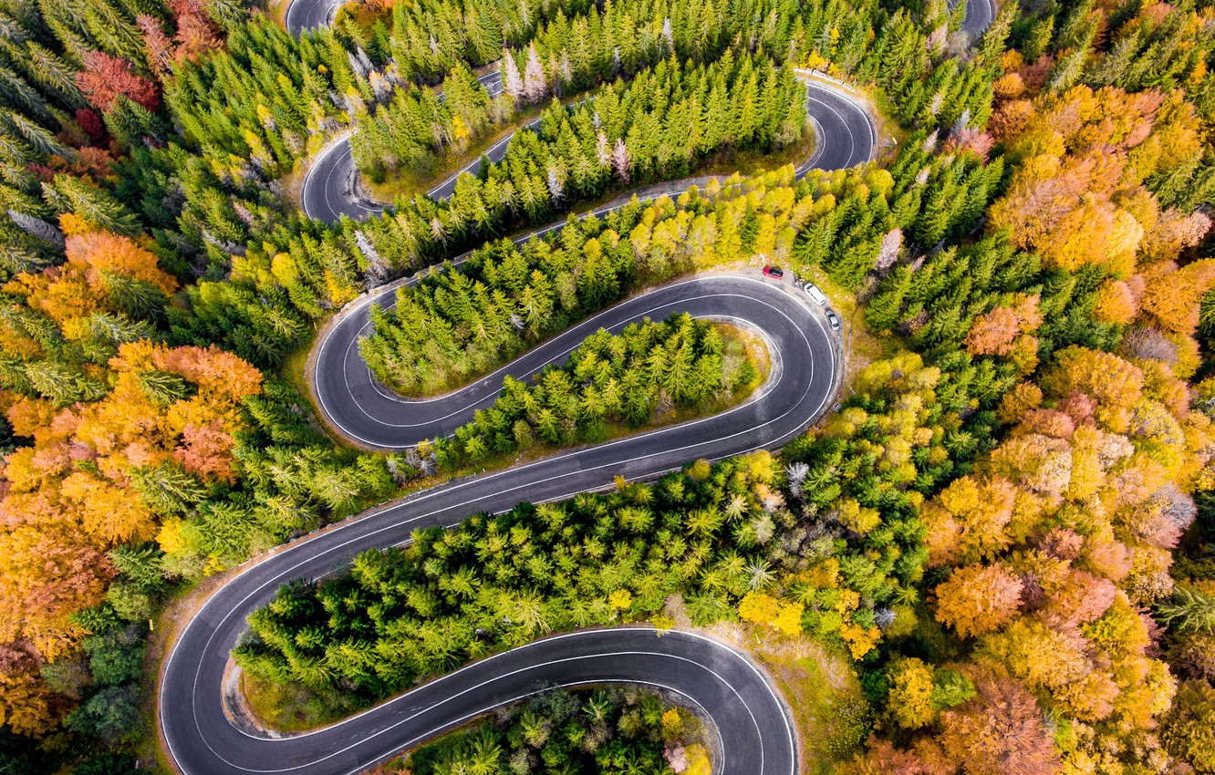 Фото обои forest, road, trees, autumn, aerial view
