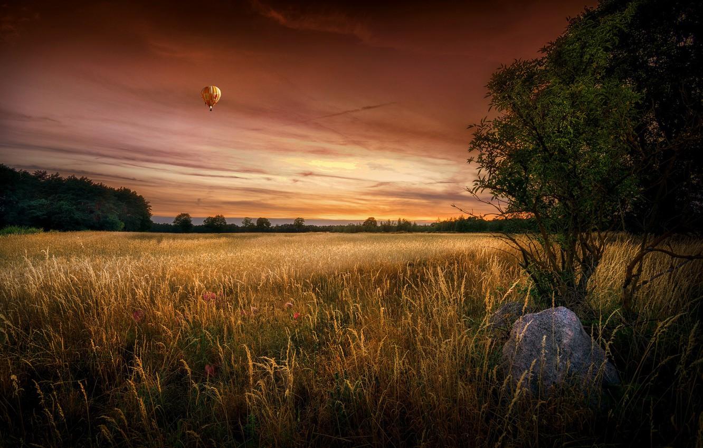 Фото обои поле, лето, закат, шар