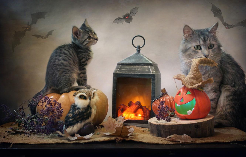 Фото обои животные, кот, листья, сова, фонарь, тыквы, ткань, Хэллоуин, детёныш, котёнок, мешковина, Ковалёва Светлана, Светлана Ковалёва