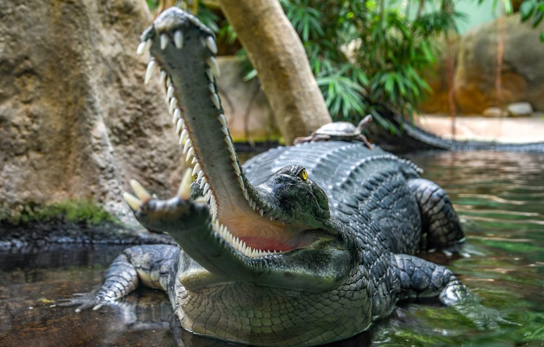 Фото обои зубы, крокодил, пасть