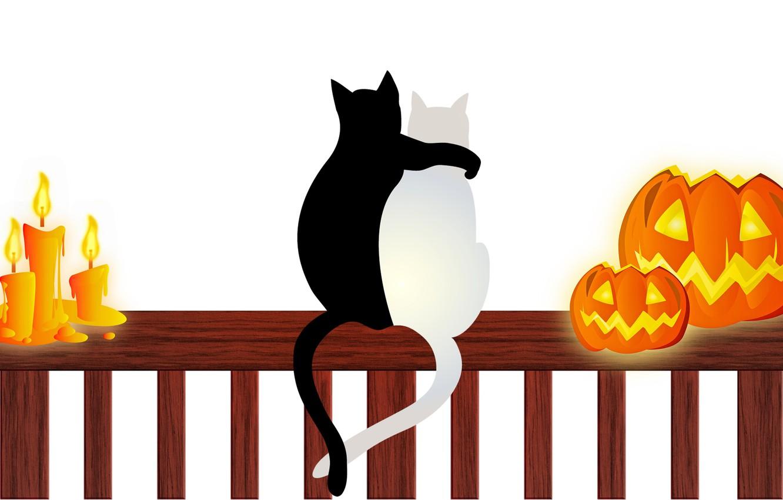 Фото обои кошки, свечи, тыквы, Хэллоуин, 31 октября