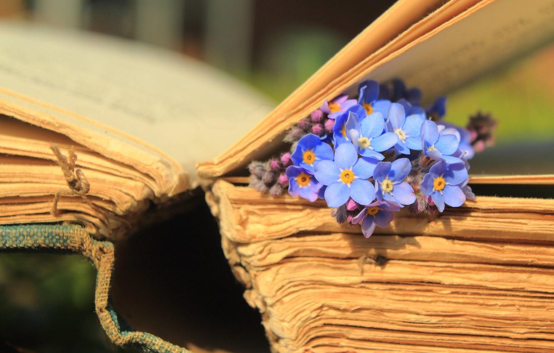 Фото обои макро, цветы, книга, страницы, незабудки