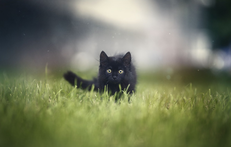 Фото обои трава, котенок, grass, kitten, Анна Яркова