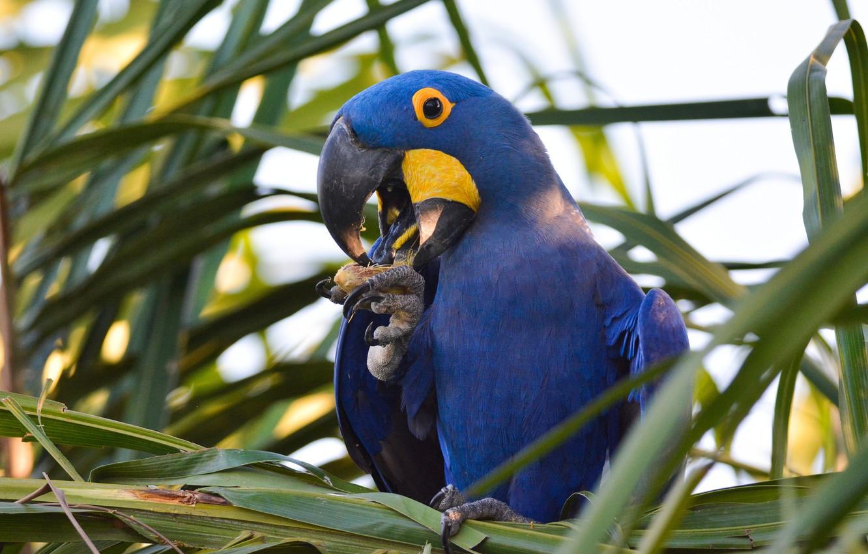 Картинки птички попугай