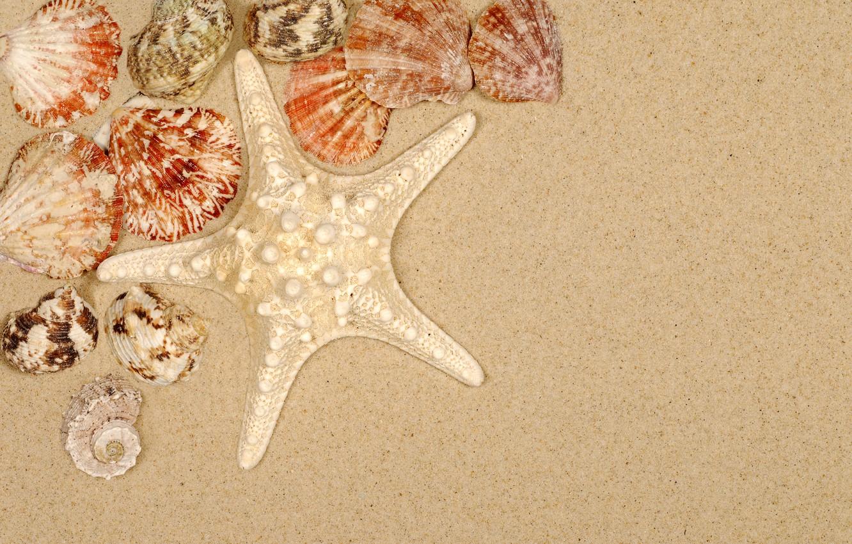 Фото обои песок, пляж, лето, ракушки, summer, beach, sea, sand, starfish, seashells