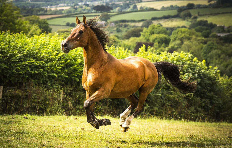 Фото обои поле, конь, лошадь, луг