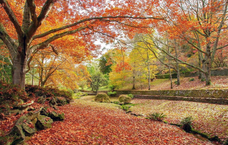 Обои осень. Природа foto 13