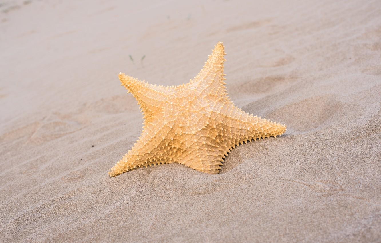 Фото обои песок, пляж, лето, звезда, summer, beach, sand, marine, starfish