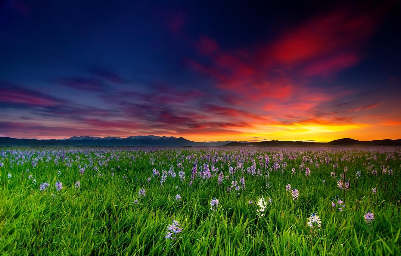 Фото обои поле, закат, цветы