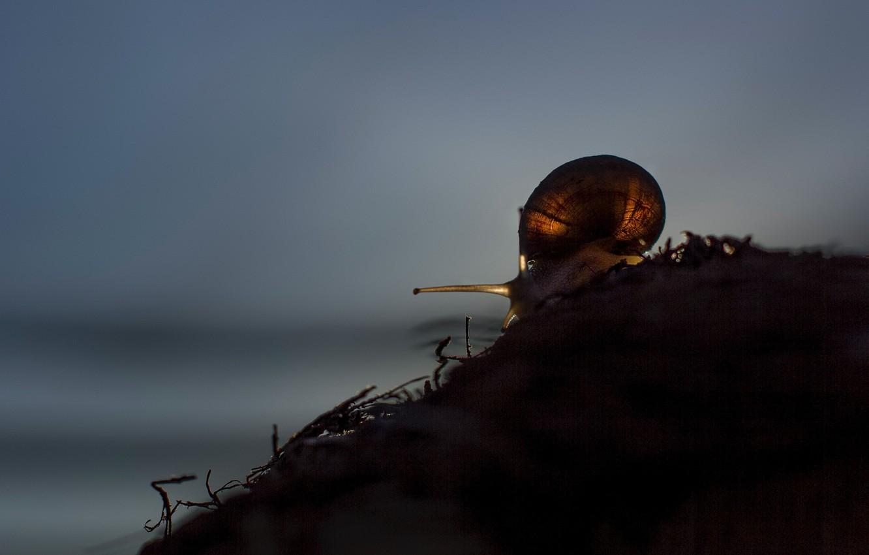 Фото обои крупный план, улитка, close-up, размытый фон, snail, blurred background, Wendy Van Zyl