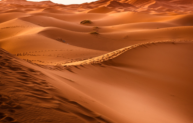 Фото обои Hot, Sahara, Sand, Desert, Dunes
