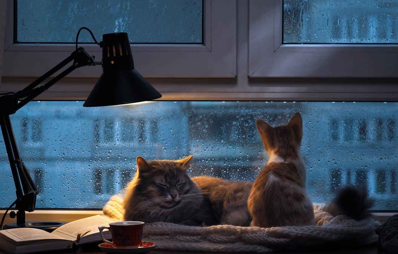 Обои комната, котёнок. Кошки foto 15