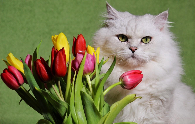 Картинка котики и цветы