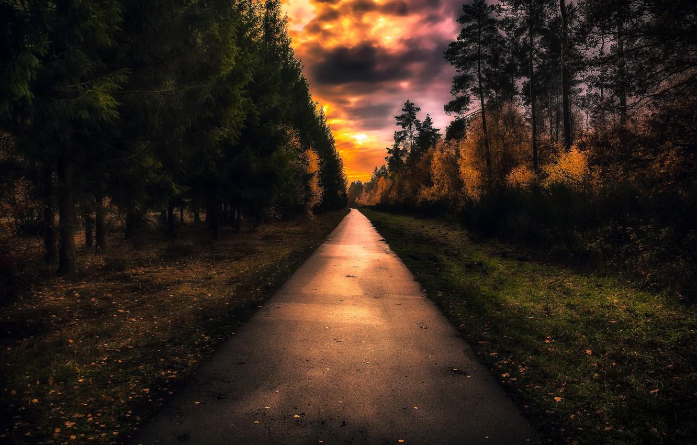 Фото обои дорога, ночь, парк