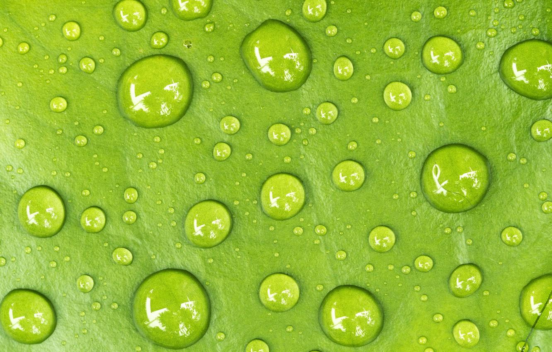 Фото обои вода, капли, лист, Макро