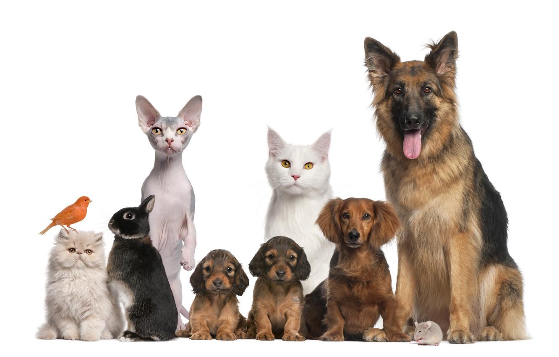 Фото обои животные, кот, собака