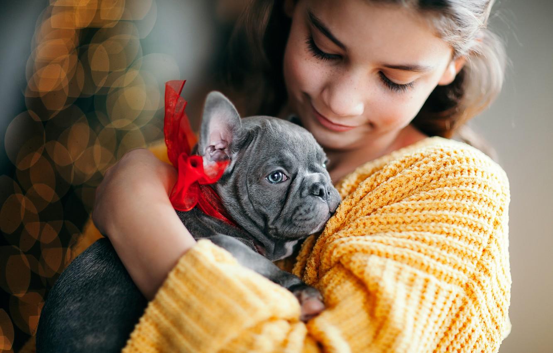 Фото обои блики, настроение, собака, дружба, девочка, щенок, мордашка, бантик, пёсик, Французский бульдог