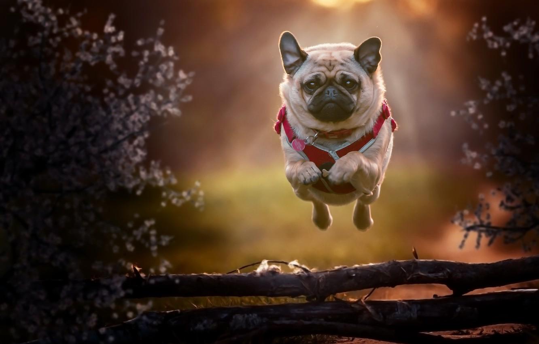 Фото обои друг, собака, бег, полёт