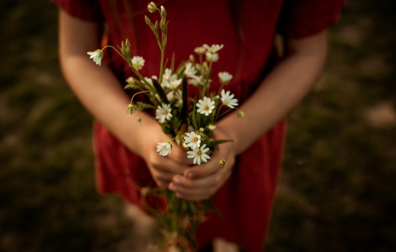 Фото обои девушка, цветы, ромашки