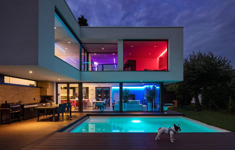 Фото обои puppy, housing, light colors, rooms