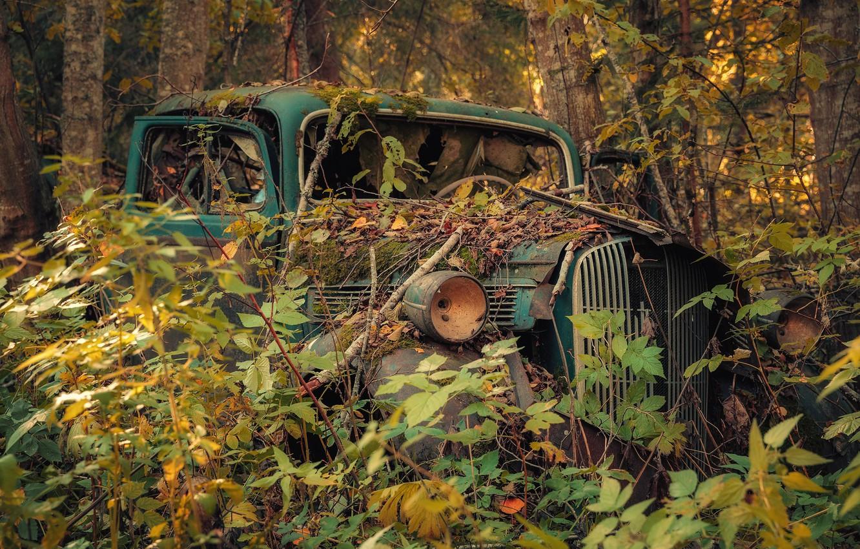 фото брошенных автомобилей в лесу стержне