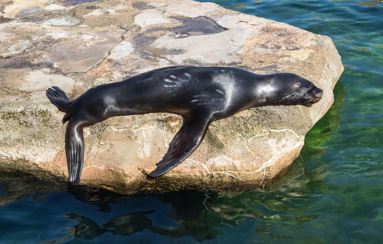 10 животных, которые почти не спят.