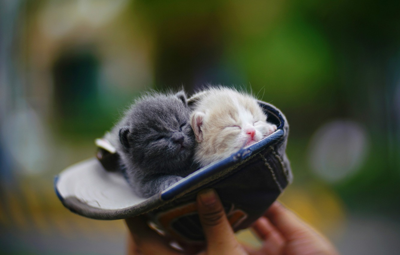 Фото обои рука, сон, малыши, бейсболка, в шляпе, размытый задний фон, крошки, закрытые глаза, два котёнка