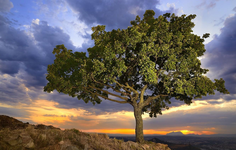 Фото обои небо, природа, дерево