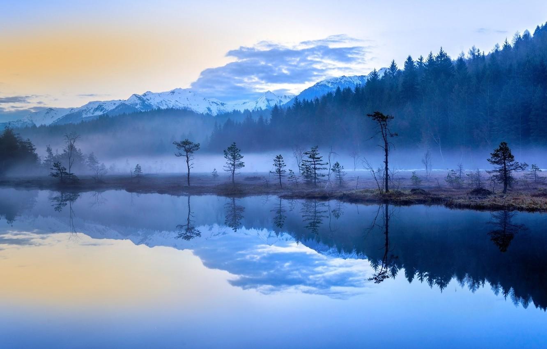 Фото обои forest, trees, lake, fog, Morning