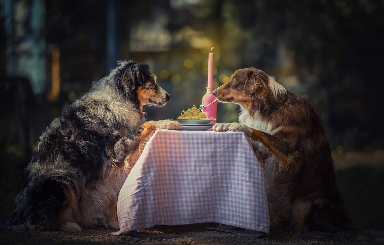 Фото обои животные, собаки, стол, свеча, пара, тарелки, спагетти, боке, аусси