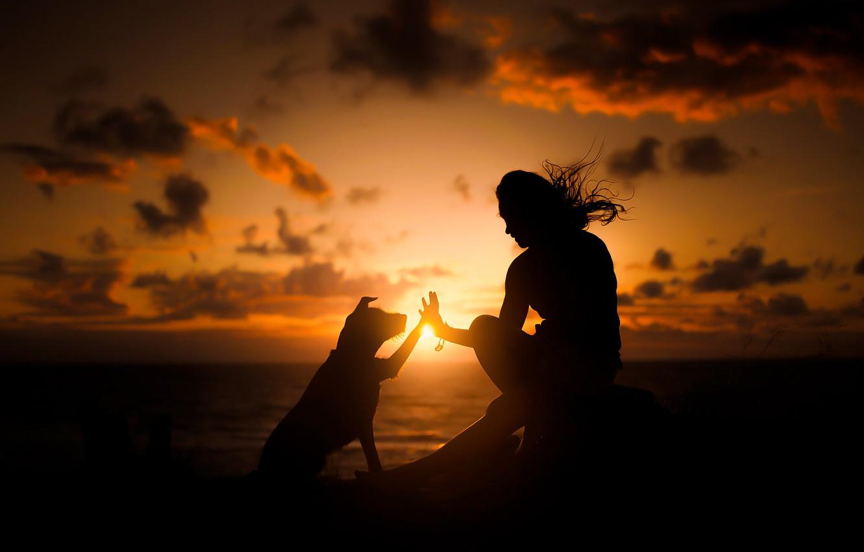 Фото обои закат, человек, собака, друзья