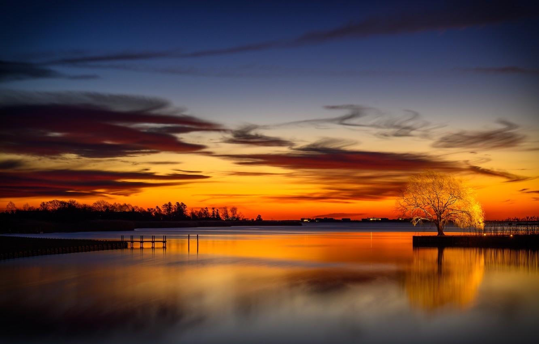 Фото обои ночь, озеро, дерево