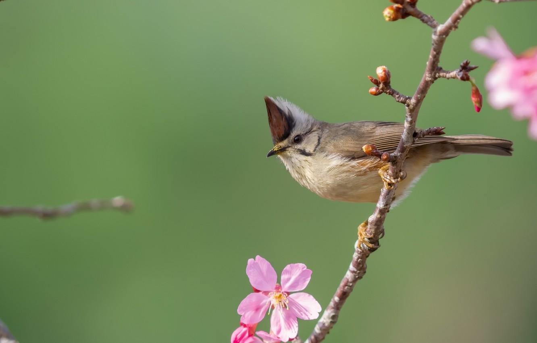 Фото обои природа, птица, ветка
