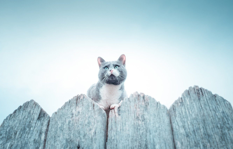Фото обои кот, забор, cat, fence, Владимир Карамазов